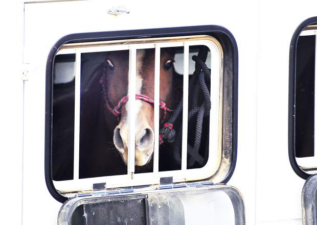 A horse gets taken from a property in Black Forest, Colo.  in a trailer.