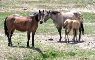Weaning can be one of the most stressful times in a young foals life. Photo by Gayle Smith