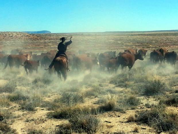 Johnson family cattle are being moved to winter range.