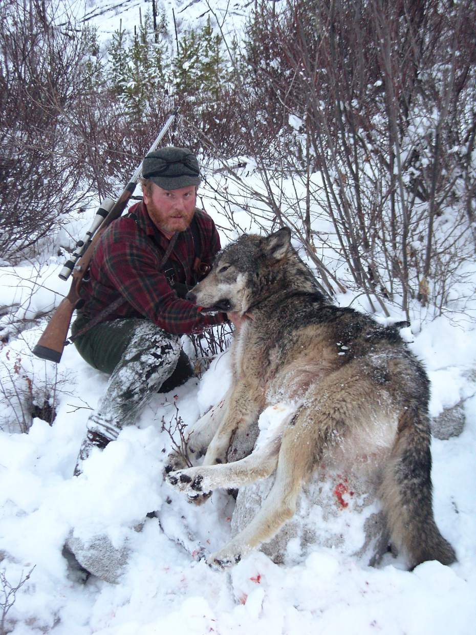 Hunting The Hunters Wolf Hunting In The West Tsln Com