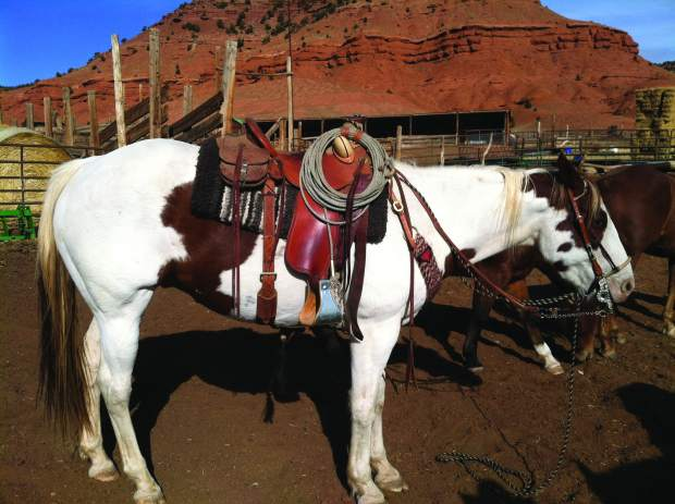 Getting to the bottom of it: saddle pads and blankets | TSLN com
