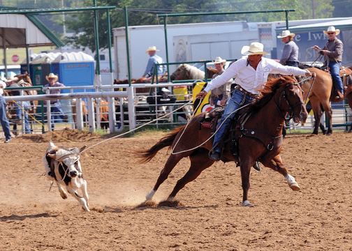Roughrider Steer Roping Draws Title Contenders Tsln Com