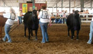 Photo by Amanda Nolz4-H kids showing their cattle projects at the 2008 SD State Fair.