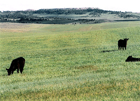 Grass fed beef spells efficiency for Wyoming ranchers | TSLN com
