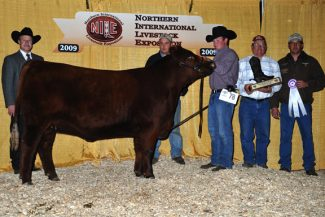 NILE Red Angus Show results