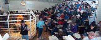 A full house was on hand for Van Newkirk Herefords 38th annual bull and female sale Monday, Jan. 17 at the ranch near Oshkosh, NE.