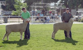 Photo by Doug HoganColby Hales of Laramie, WY, and Bryce McKenzie of Buffalo, WY, exhibit Columbia sheep at the Wyoming State Fair. McKenzie placed first and second in the Columbia sheep show.