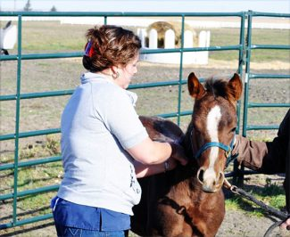 Courtesy photoMost veterinarians recommend starting treatment of foals for ascarids at two months of age. Courtesy photo