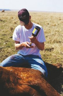 Dr. Robert Cope discusses the differences in uterine and vaginal prolapses in cattle