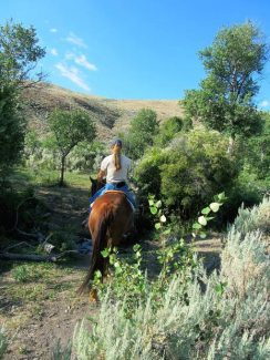 How to deal with ticks on horses, and what health issues to watch for