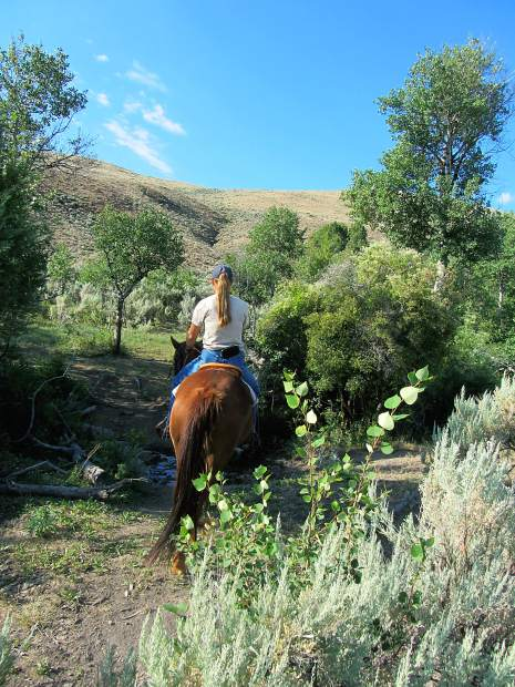 How to deal with ticks on horses, and what health issues to watch