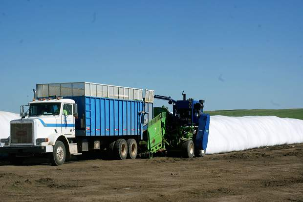 Haylage an option for alfalfa and other feeds | TSLN com