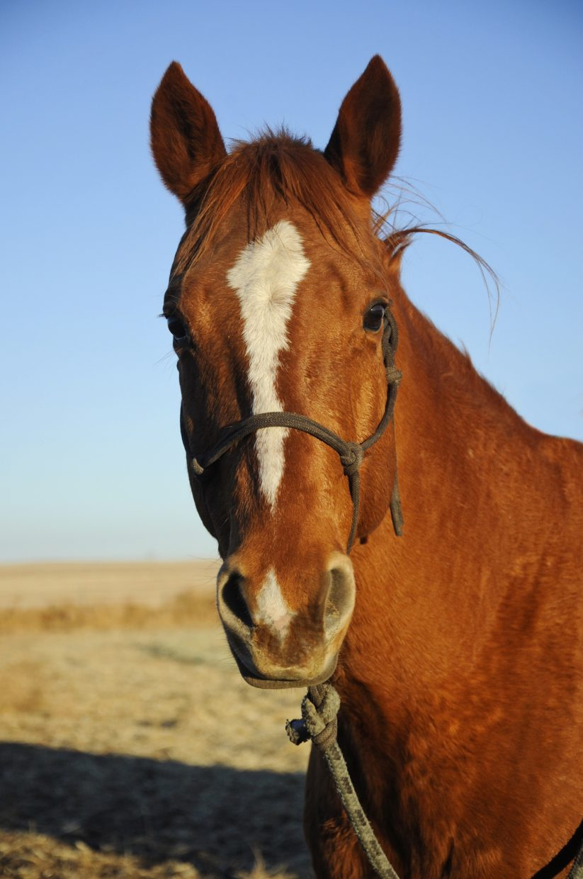 the face says it all horses� expressions give clues to