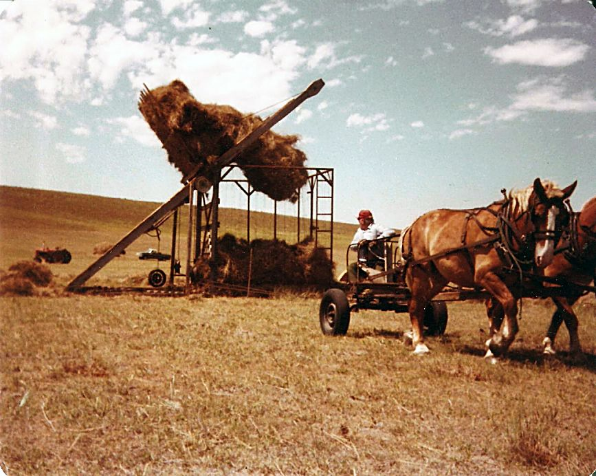 Norman Licking dumping hay using a Beaverslide stacker in the 1970s. Photo courtesy Licking family