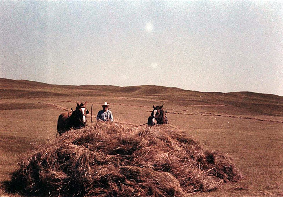 Norman Licking, sweeping hay. 1970s. Photo courtesy Licking family