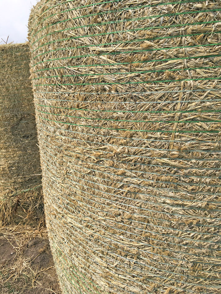 net-wrapped hay bale