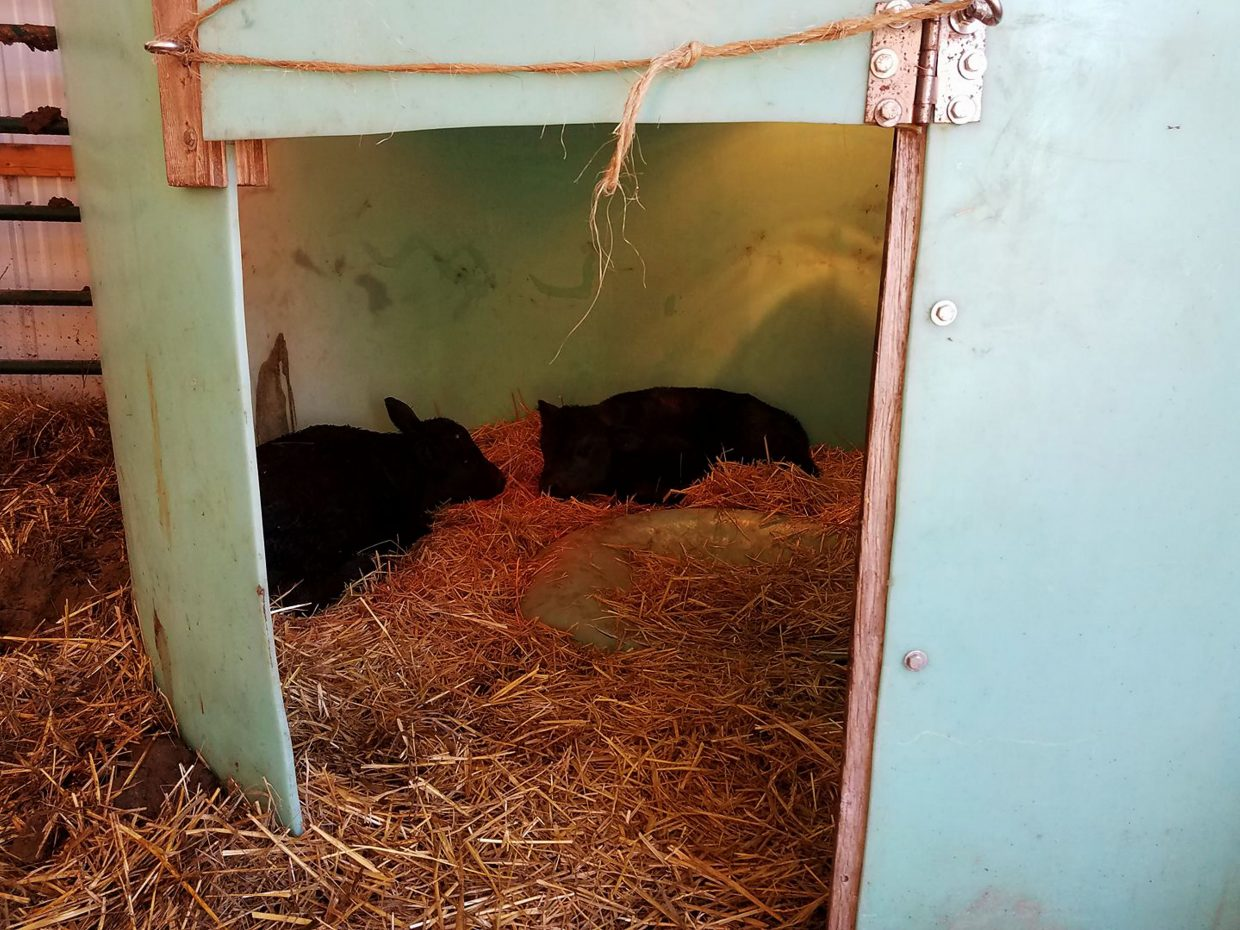Water Tank Shelter : Calf shelters made out of repurposed materials easy on