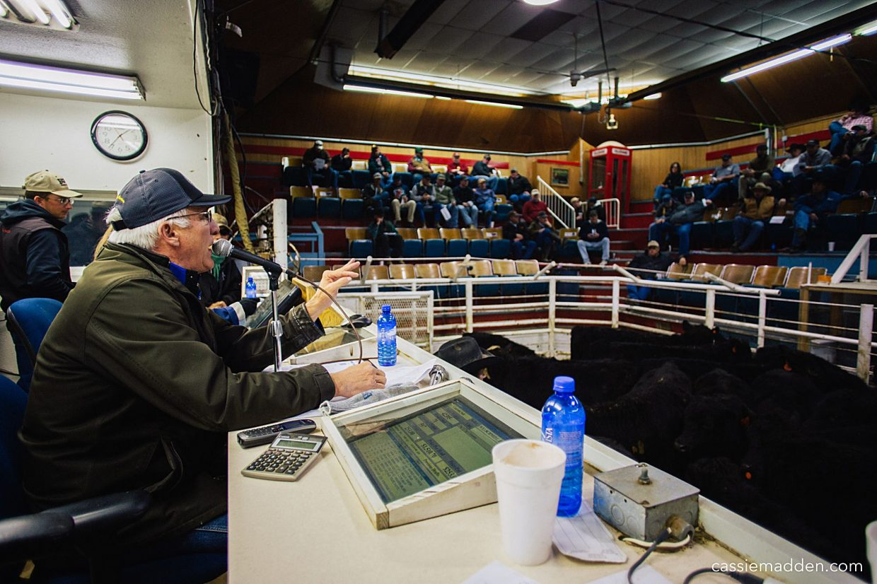 Without the familiar sound of Shawn Madden's voice, Fridays will be a little different at Torrington Livestock. The auction barn will business as usual with their weekly sales, video sales options and private treaty arrangements. Photo by Cassie Madden