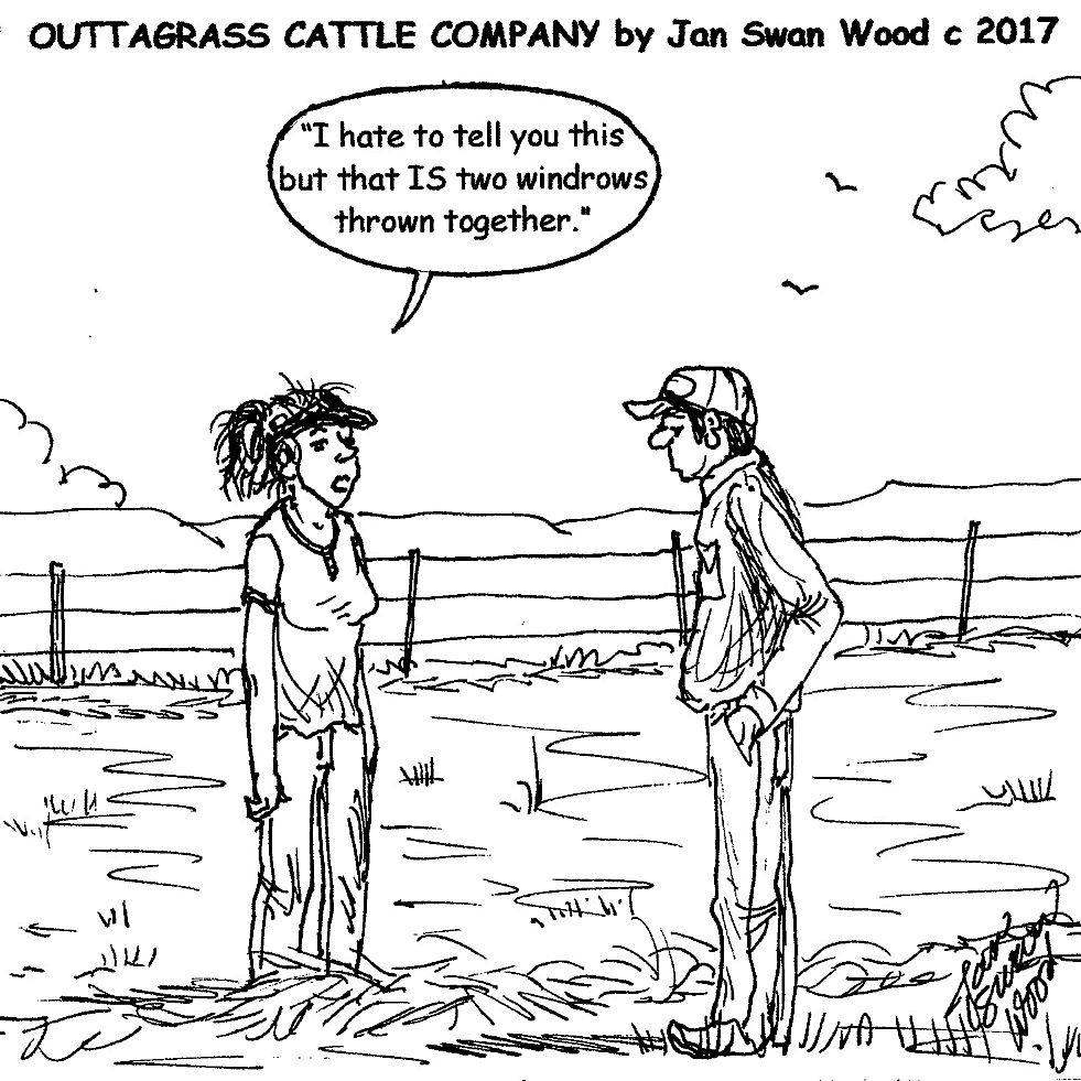 3a7897f56f6 Outtagrass cattle co cartoon jan swan wood for the july edition of tri  state livestock news