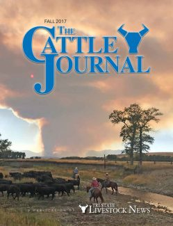 2017 Fall Cattle Journal: Recovering