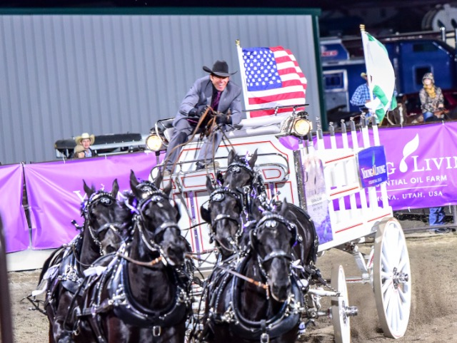 Young Living Percherons Offer Daily Entertainment At The