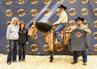 The Right Fit: Getting a horse ready for sale