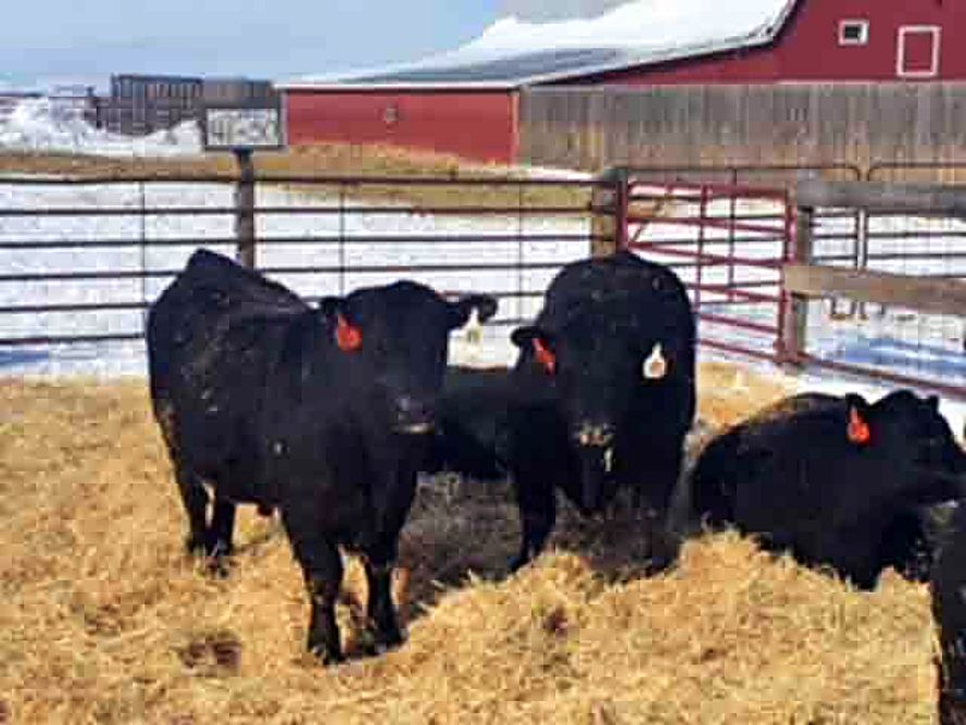 Apex Angus 45th Annual Production Sale Tsln Com
