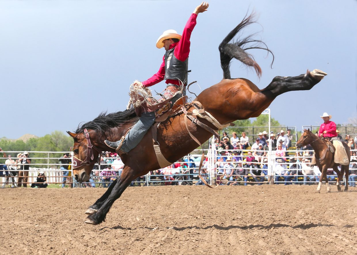 Isaac Diaz on Gunslinger (Bailey Pro Rodeo) at Miles City Bucking Horse Sale
