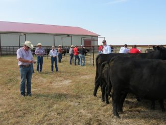 2019 Winter Cattle Journal: Barstow Angus