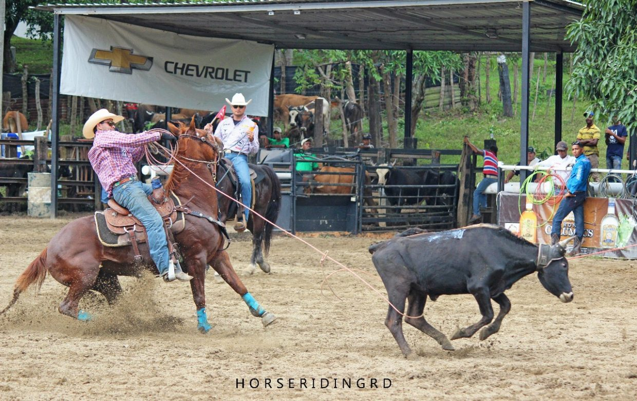 a8e6170e32f27 Beaches And Brahmas Luis Lahoz Started Team Roping Career In