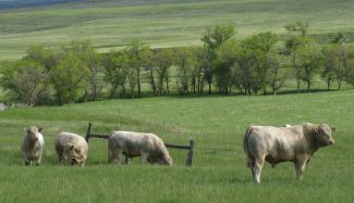 Winter Cattle Journal 2019: Valley View Charolais