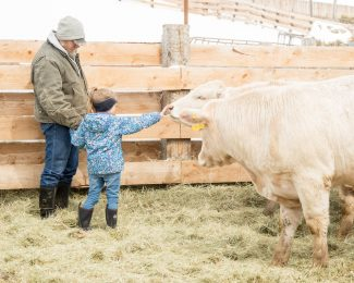 Winter Cattle Journal 2019: Genetic prediction playing larger role in beef cattle selection