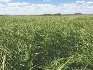 Best management practices for  converting cropland to pasture