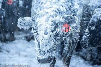 PHOTOS: March Spring Storm in Midwest Causing Major, Ongoing Issues for Ranchers