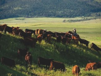 MSU to offer new ranching systems bachelor's degree under new Dan Scott Ranch Management Program