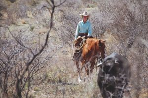 The Cowboy Pastor's Wife: The Bull That Know No Bounds
