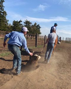 Excellent work: Local ranchers say youth branding crew does a fantastic job
