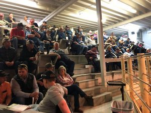 Bruner Angus Ranch – Turn out Bull Sale