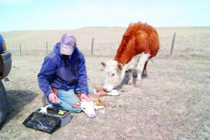 Producers Traceability Council looks for a path for E-ID