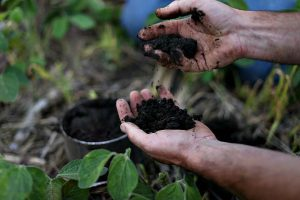 Soil management affects long term outcomes