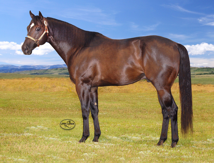 Quarter Horse Stallion First Down Mr Jess Brings Speed And Size To