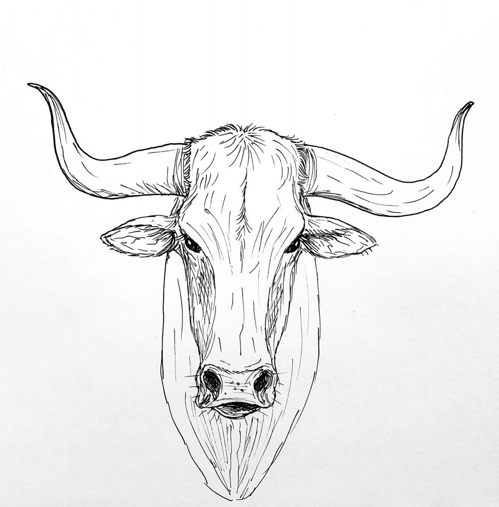 Texas Longhorn Coloring Page - Coloring Home | 1024x1007